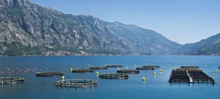 Coastal fish farming in Montenegro photo