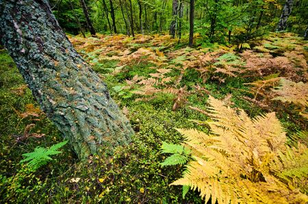 wilds: Deep in the forest with ferns