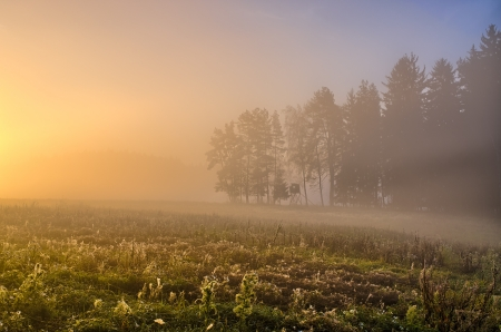 Autumn landscape with meadow covered by fog photo