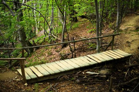 Wooden footbridge in the forest photo