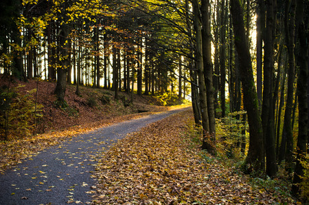 rainy season: Road in dark forest during the autumn Stock Photo