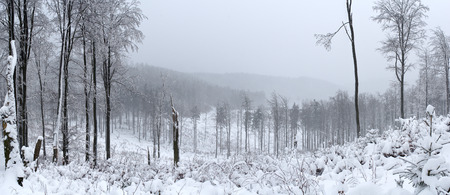 landsape: Winter landsape in Sowie Mountains, Poland