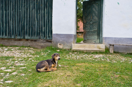 guard house: Dog is laying in front of his house