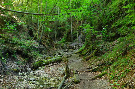 slovak: Path deep in the gorge of Slovak Paradise