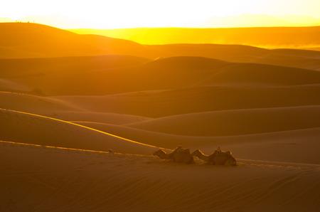 desierto del sahara: Puesta del sol caliente en el desierto del Sahara
