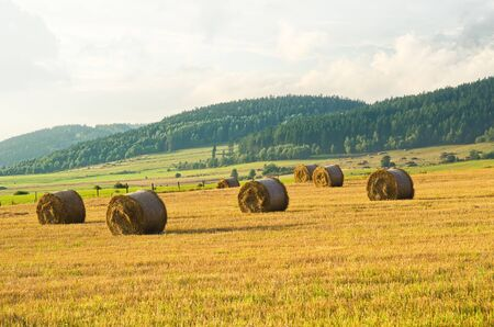 Rolls of hay on the meadow
