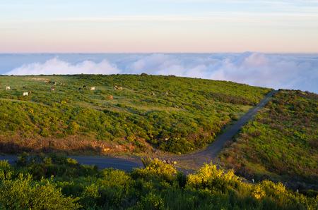 Road on Paul da Serra plateau - Madeira, Portugal