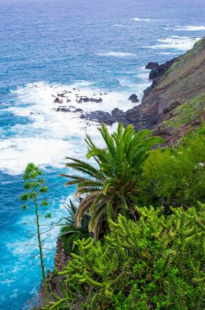 Green shore of Tenerife island Zdjęcie Seryjne - 131507184