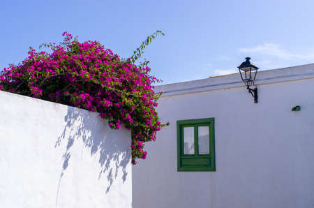 White wall with window and flowers