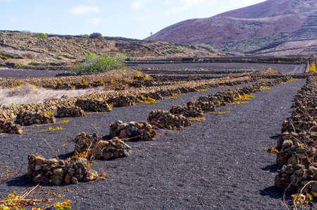 Typical volcanic vineyards in Lanzarote Island - Spain Stok Fotoğraf - 154053266