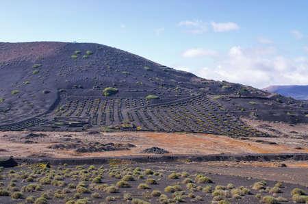 Typical volcanic vineyards in Lanzarote Island - Spain Stok Fotoğraf - 155410891