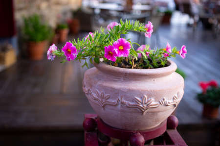 Beautiful greece-style pot with pink flowers Stok Fotoğraf