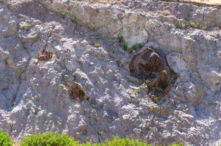 Famous petrified forest on Lesbos island - Greece Stok Fotoğraf - 158226645