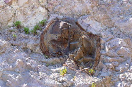 Famous petrified forest on Lesbos island - Greece