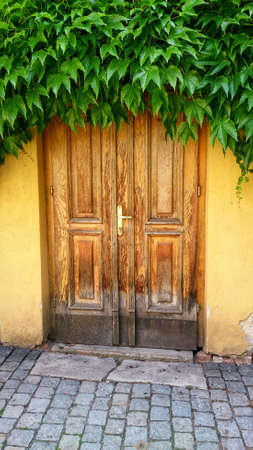 Old wooden doors covered by green leaves Stok Fotoğraf - 159070748