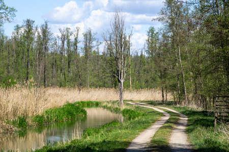 Woodlands in Dolina Baryczy - Poland Stok Fotoğraf
