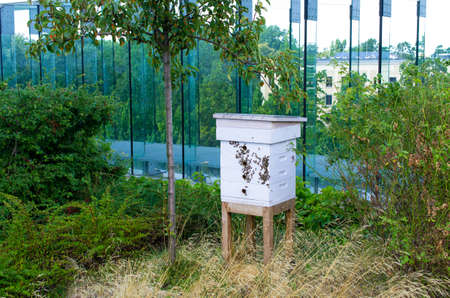 Modern beehive on roof of the building