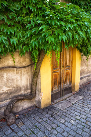 Old wooden doors covered by green leaves Stok Fotoğraf
