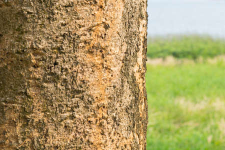 haulm: haulm of tree with green background Stock Photo