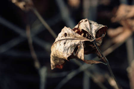 fade away: dried leaves Stock Photo