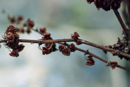 fade away: seeds on dried branch