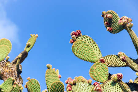 green cactus in blue sky