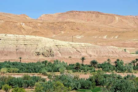 Grünpflanzen in Marokko Dades Valley Standard-Bild - 92145663
