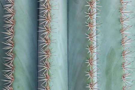 close up of thorn on cactus tree Stock Photo - 92183042