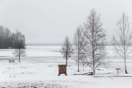 trees at frozen lakeside in winter