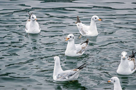 a group of seagulls in water Reklamní fotografie