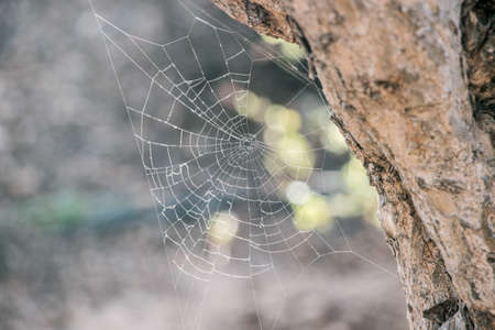 spider net in nature