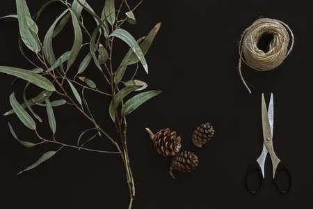 eucalyptus branches on dark background
