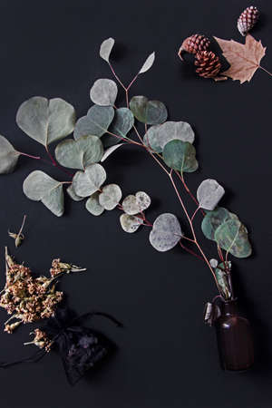 eucalyptus branch on dark background