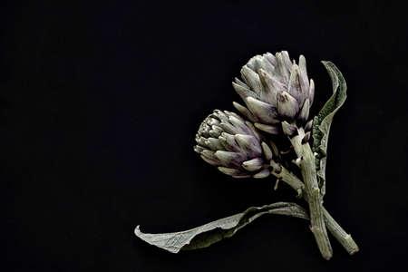 fresh artichoke on black background