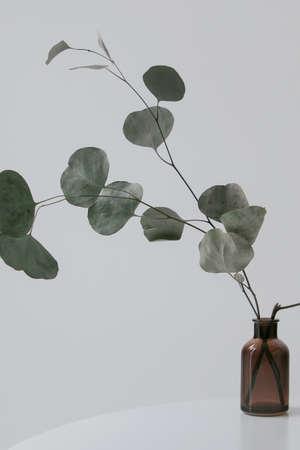 eucalyptus branches in brown vase