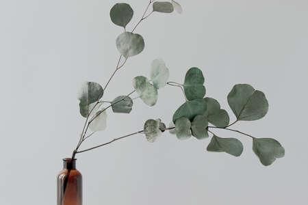 eucalyptus branches in vase Reklamní fotografie