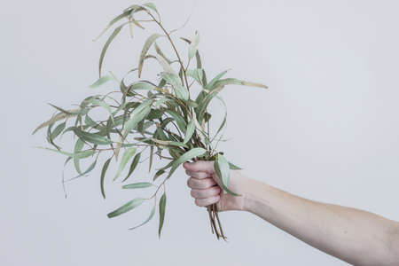 hold eucalyptus branches in hand Reklamní fotografie