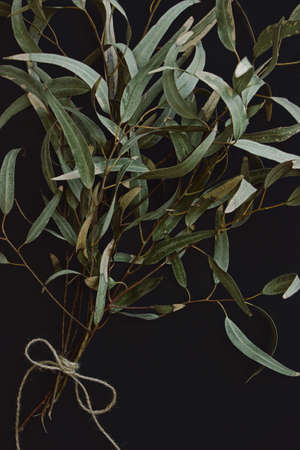 eucalyptus branches with dark background