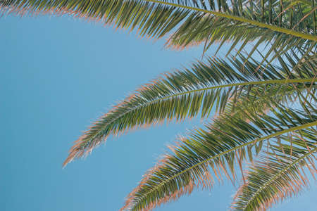 green palm tree leaves in blue sky