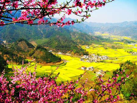 peach blossom: Peach Blossom Village Stock Photo