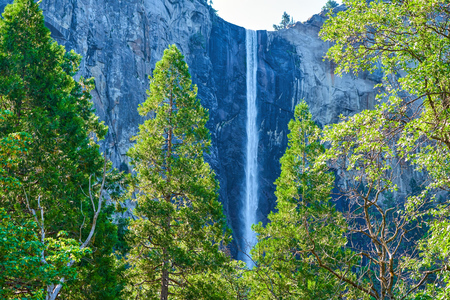 Bridalveil Falls at Yosemite National Park with green sunlit trees in the forwground