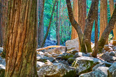 Enchanted forest view with boulders, tree trunks and forest in the background