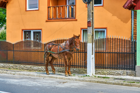Parked horse next to colorful orange house in rural Transylvania Romania
