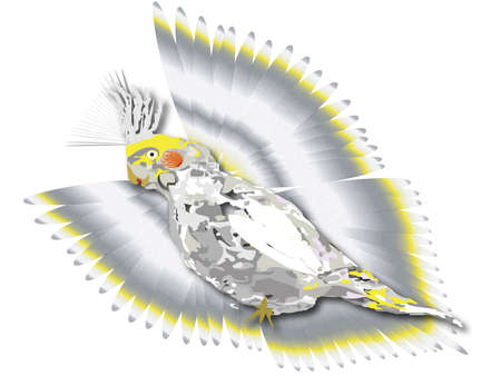 cockatiel in flight background. abstract cockatiel at rest in foreground Stock Photo