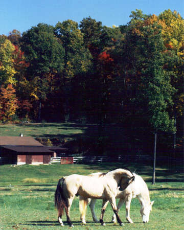 Autumn Country Scenery With Horses Stock Photo