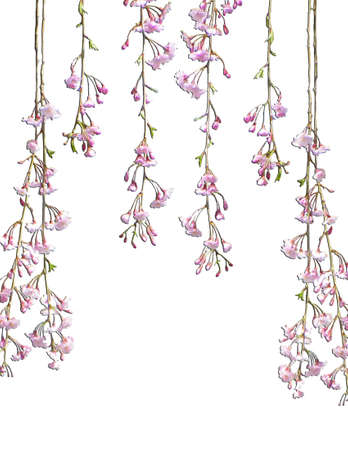 Hanging Tree Blossoms against white background