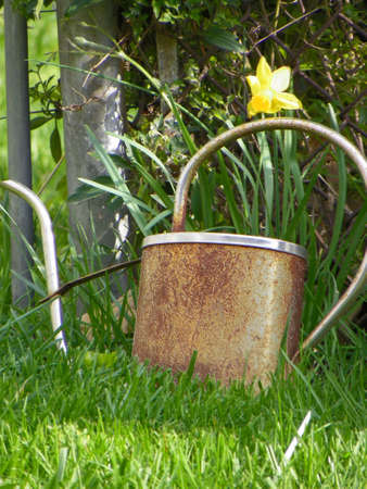 rusty watering can leaning against fence with grass in the foreground and daffodil in the background