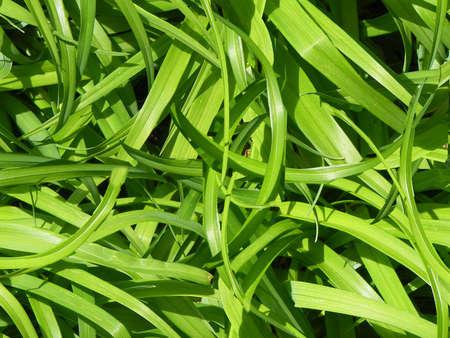 green groundcover Stock Photo
