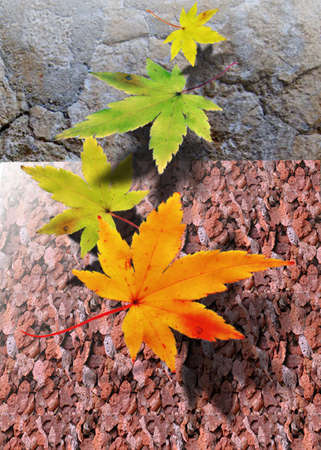 floating leaves Stock Photo - 6993509