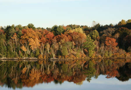 reflect: autumn leaves on trees at rivers edge reflect on still water Stock Photo